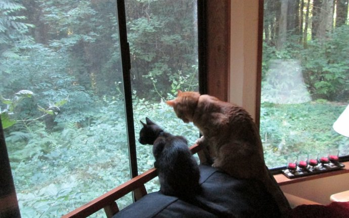 How Can I Make My Windows Safe for My Cats? | The Cat Site
