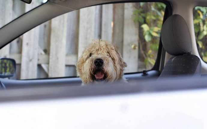 Car Windows Screen for Dog