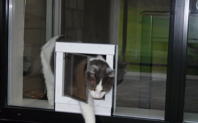 Cat Door For Windows Screen Window Screens